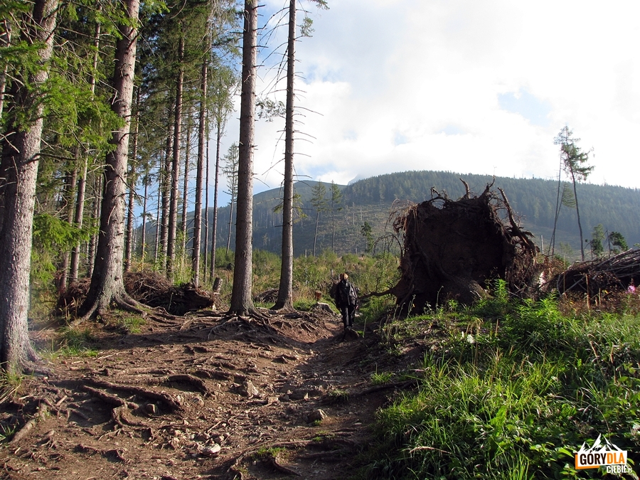 Zielonym szlakiem naKrywań