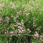 Kwitnąca polana Pod Magurki