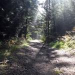 Droga z Krośnicy na Lubań