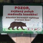 Uwaga na niedźwiedzie