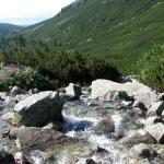 Żabi Potok (Žabí potok) w Dolinie Mięguszowieckiej