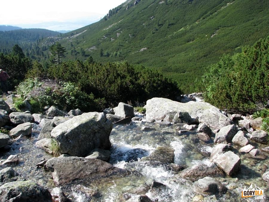 Żabi Potok (Žabí potok) wDolinie Mięguszowieckiej