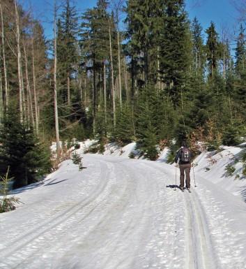 Trasa narciarstwa biegowego z Obidowej na Turbacz