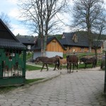Stadnina koni w Jaworkach