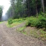 Droga (nieznakowana) z Półrzeczek na Jasień 1062 m