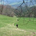 Zielony szlak pod szczyt Wysokiej 1050 m