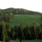 Wypas owiec na zboczach Borsuczyn 939 m