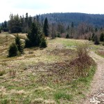 """Na trasie """"Mogielica"""" - polana przed Przełęczą Przysłopek"""