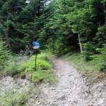 """Na trasie """"Mogielica"""" - skrzyżowanie z żółtym szlakiem Słopnice - Mogielica"""