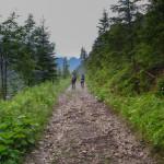 Zielony szlak na początku Doliny Jaworowej