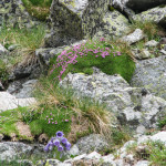 Kolorowa roślinność Zadniej Doliny Jaworowej