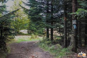 Wejście na Polanę Myconiówka, zielony szlak pieszy, żółty rowerowy i narciarski skręcają w lewo, w kierunku Dobrej