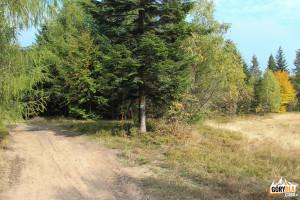 Szlak zielony pieszy, żółty rowerowy i narciarski prowadzą w kierunku Dobrej.