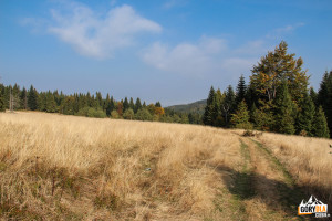 Jesienna polana Jaworze na Łopieniu