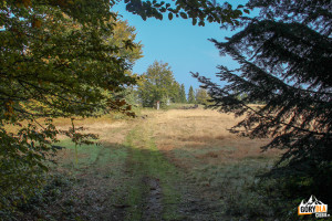 Wyjście z lasu na Polanę Jaworze. Widok na szczyt Łopienia