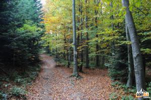 W prawo żółtym szlakiem do Lubnia