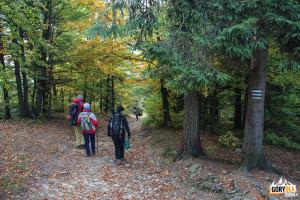 Pod szczytem Lubonia Wielkiego - niebieski szlak z Rabki – Zaryte i zielony z Rabki Śmietanowa