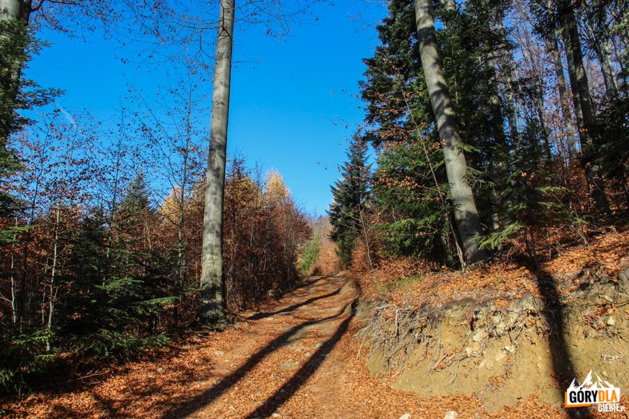"""Podejście zielonym szlakiem dogórnej stacji wyciągu narciarskiego """"Śnieżnica"""""""