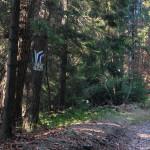 Rozwidlenie szlaków przed Młodzieżowym Ośrodkiem Rekolekcyjnym na Śnieżnicy