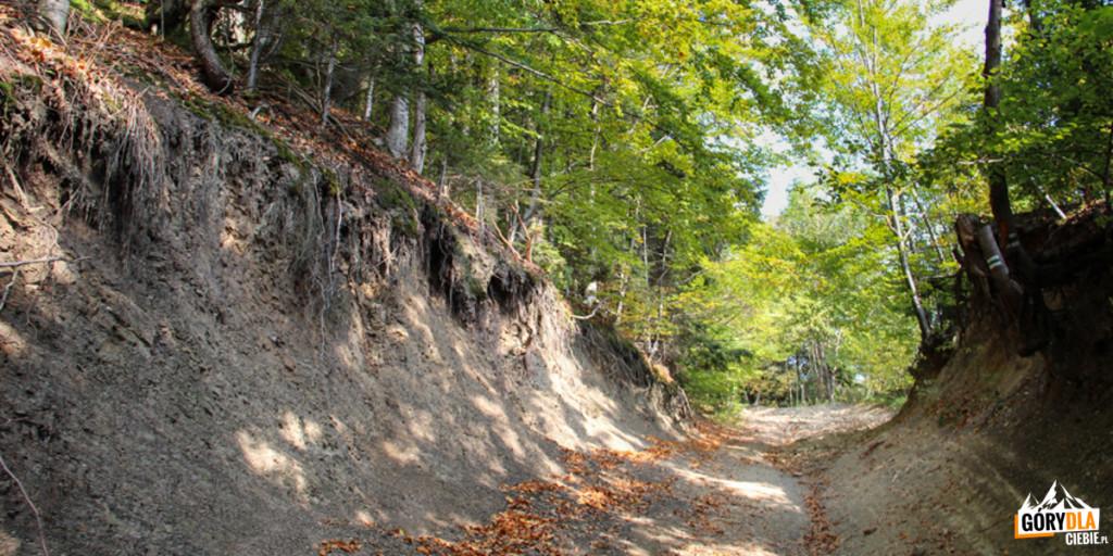 Zielony szlak zPrzełęczy Rydza Śmigłego naŁopień