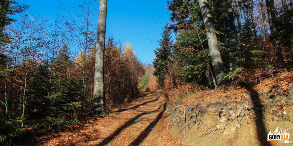 Zielony szlak naŚnieżnicę
