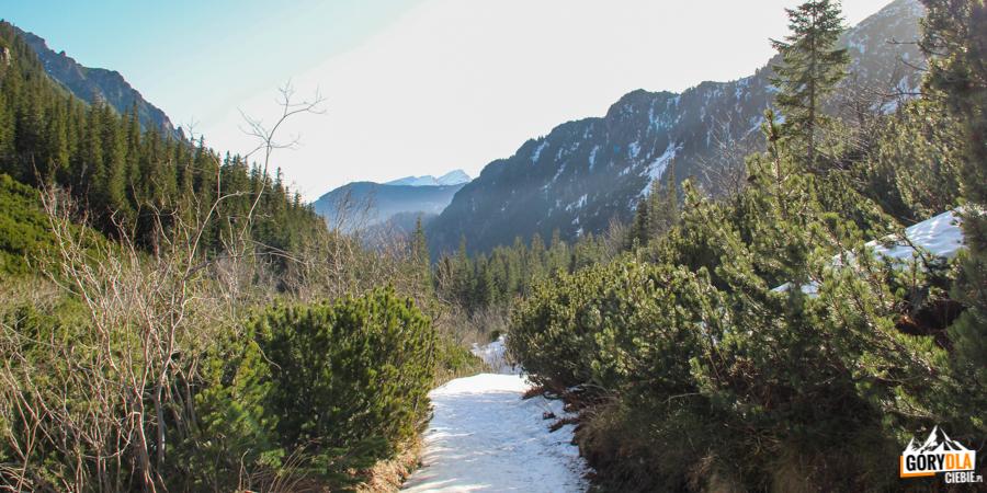 Górna część Doliny Roztoki, na horyzoncie widać Tatry Bielskie
