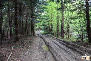 Droga przy Białym Potoku