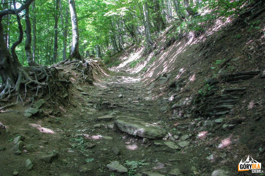 Zejście żółtym szlakiem zPołoniny Wetlińskiej naPrzełęcz Wyżnią