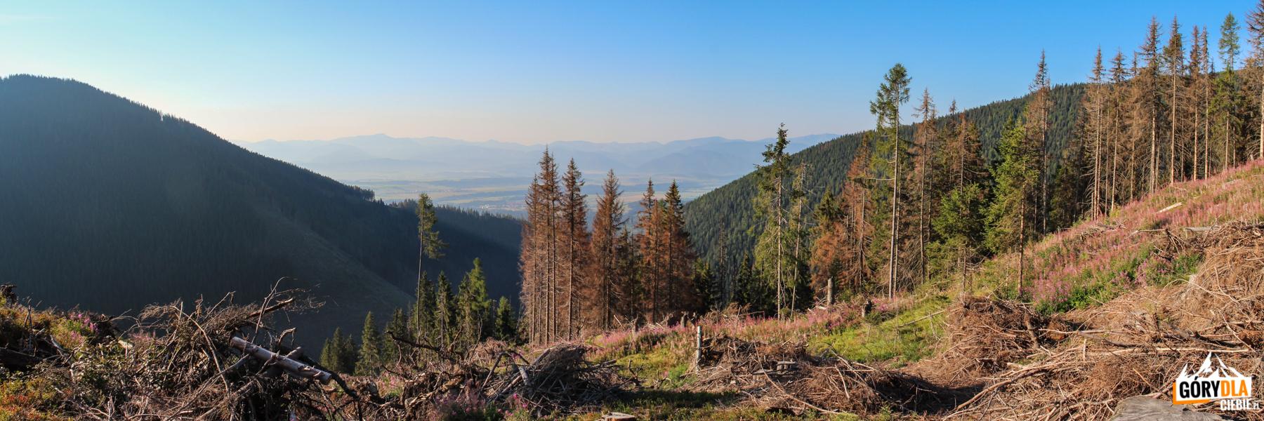 Widok naWąską Dolinę zzielonego szlaku naOtargańce