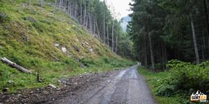Wąska Dolina - droga w kierunku polany Niżna Łąka