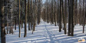 Droga z Jałowca (1111 m) na Przełęcz Opaczne