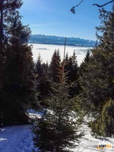 Widok na Tatry z podejścia na Lubań