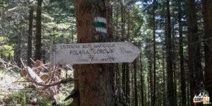 Zielony szlak z Hali Miziowej do Sopotni, scieżka na Halę Górową