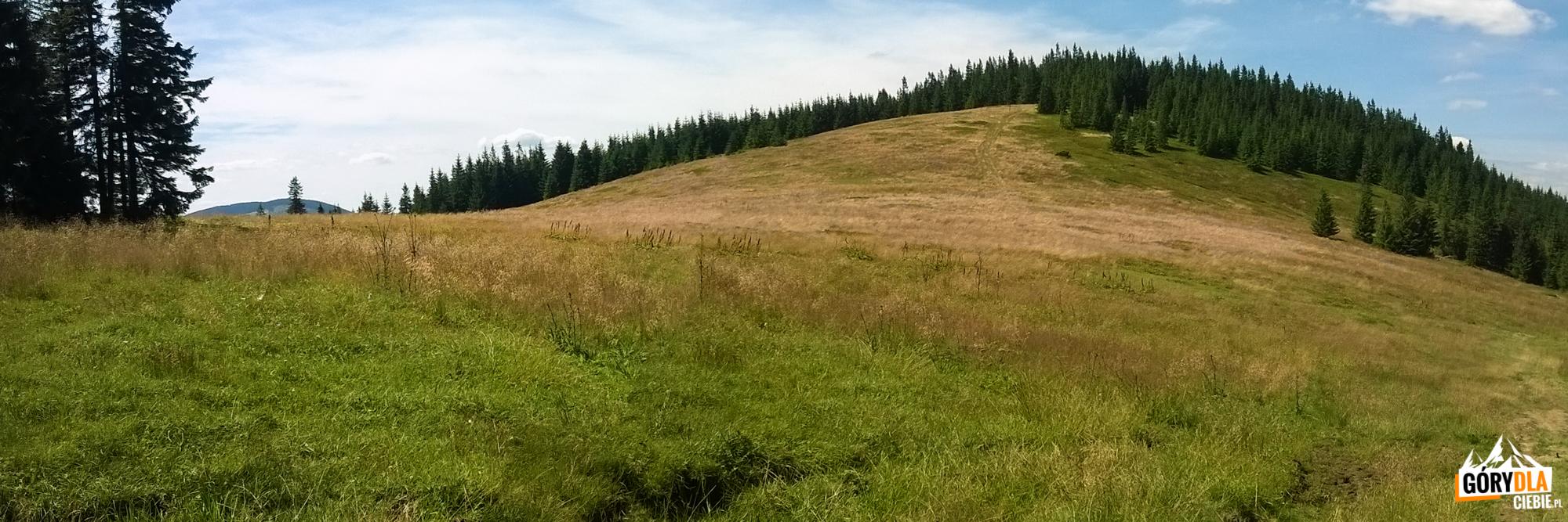 Hala Jodłowcowa natrasie zielonego szlaku zHali Miziowej