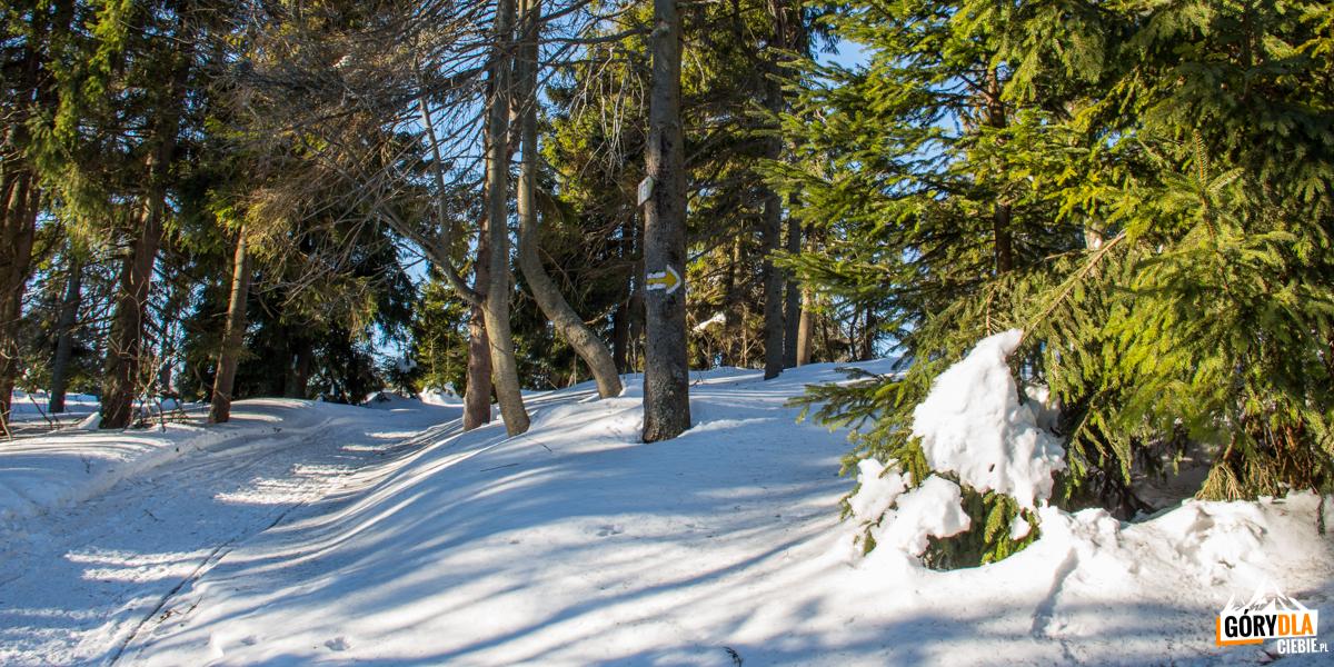 Żólty szlak naWielką Raczę (1236 m) - ostatni fragment przeed schroniskiem