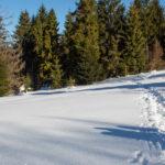 Na czerwonym szlaku - Przełęcz Śrubita