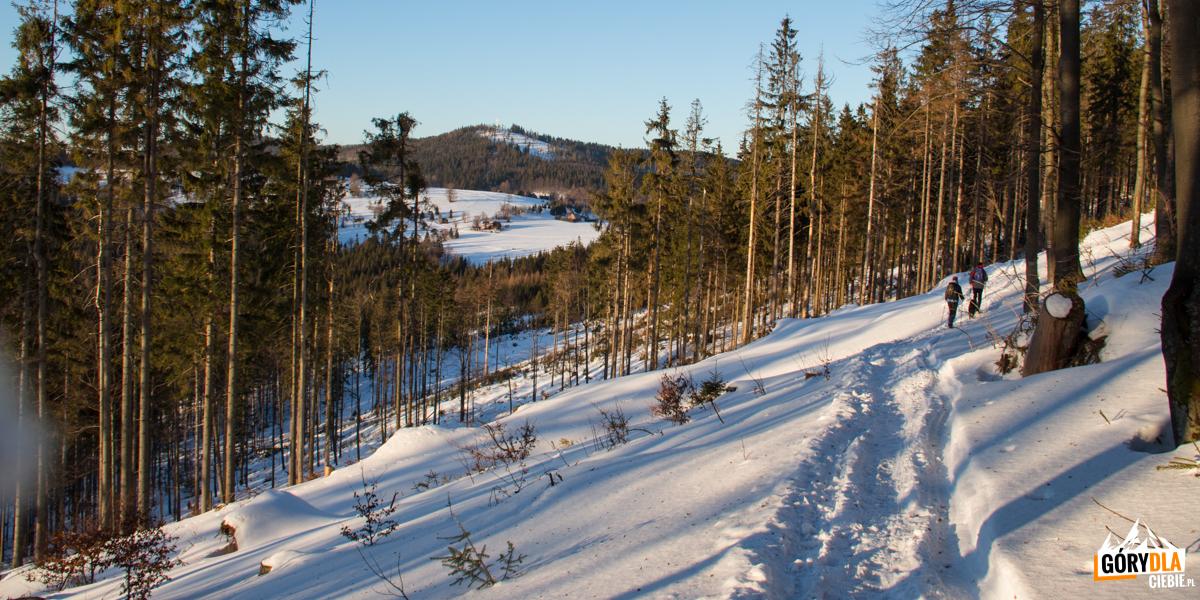Czerwony szlak zbiega zgrani naPrzełęcz Przegibek (990 m)