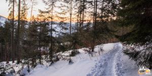 Zejście zielonym szlakiem z Przełęczy Przegibek do Rycerki Kolonia