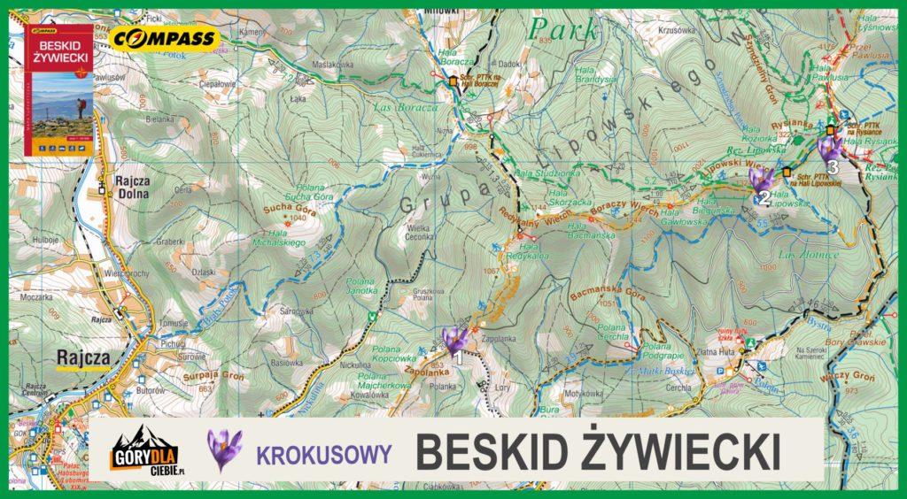 Mapa Krokusów - Beskid Żywiecki