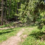 Czerwony szlak z Płaśni na Przełęcz Cerla (610 m)