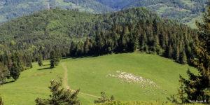 Hala pod szczytem Wysokiego Wierchu i przekaźnik na Jarmutej