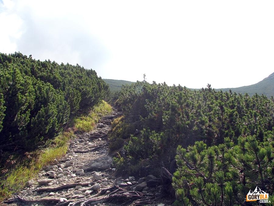 Zielonym szlakiem na Krywań