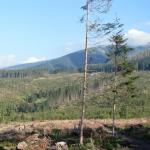 Powalone połacie lasu nad Trzema Źródłami