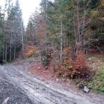 Dlina potoku Forendowskiego