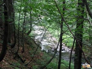 Zejście do doliny potoku Forendowskiego