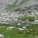 Wołowe Stawki (Volie plieska)
