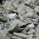 Dolina Młynicka – miejsce katastrofy śmigłowca w 1979 roku