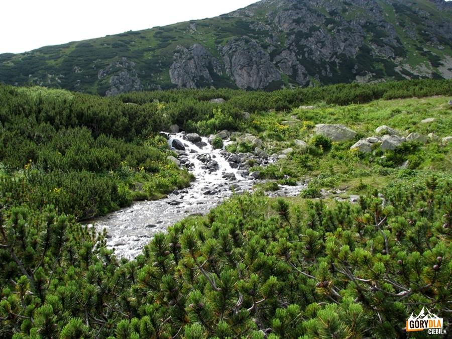 Dolina Furkotna (Furkotska dolina)