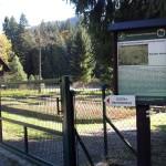 Łomnica Zdrój – szkółka leśna