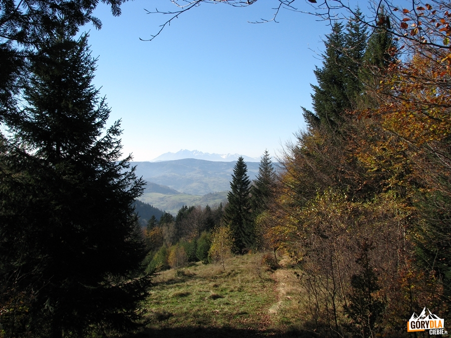 Tatry widziane z Hali Groń